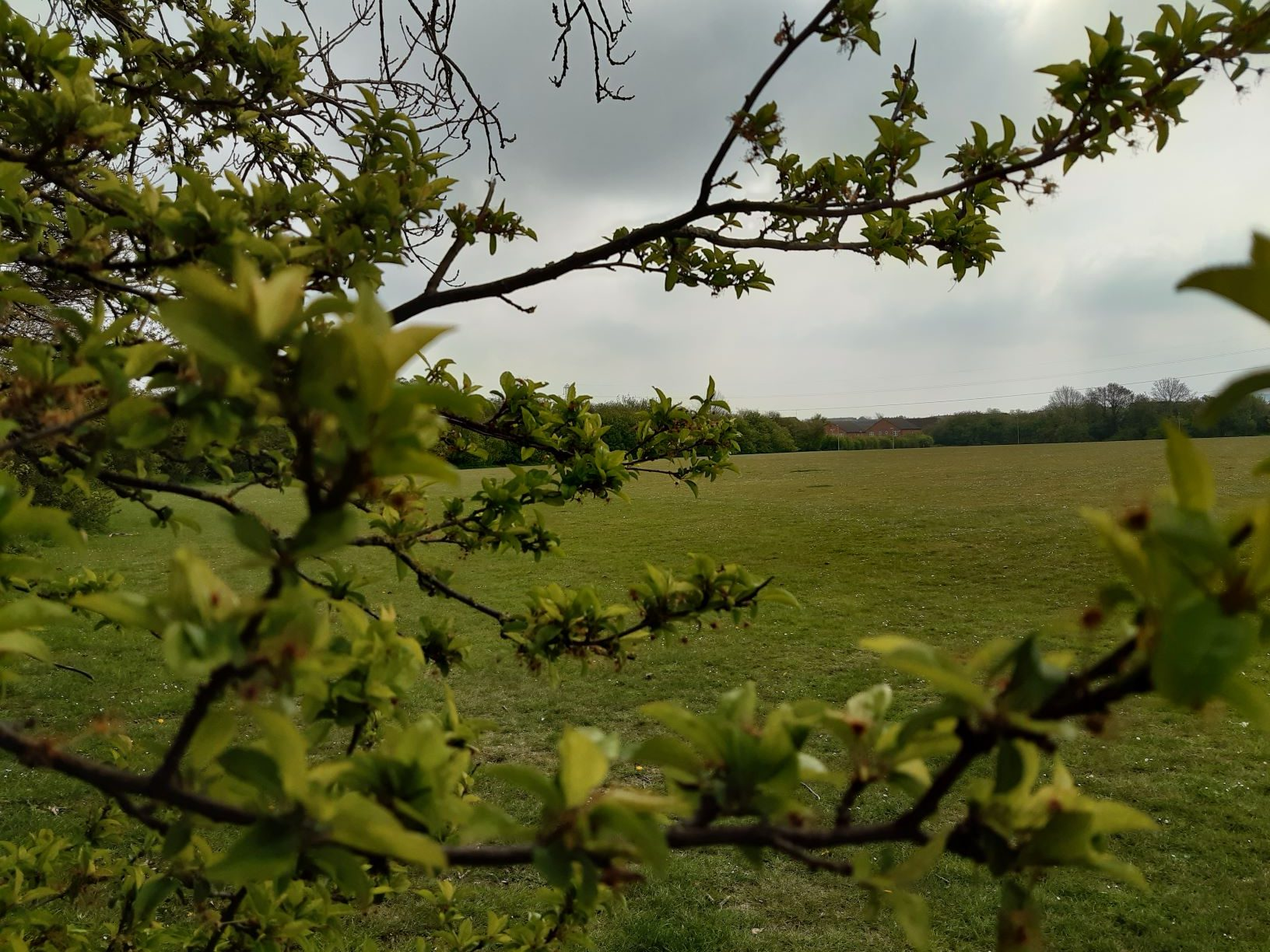 Image of spring tree buds in Beautiful Bedfordshire